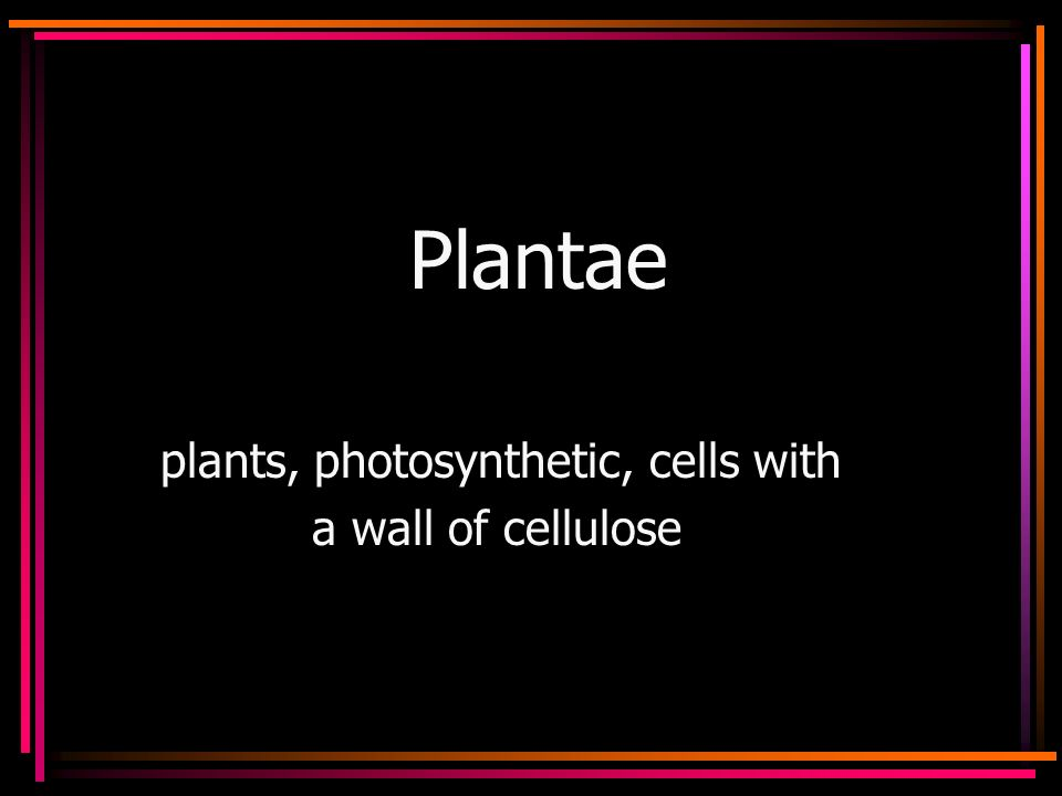 Plantae plants, photosynthetic, cells with a wall of cellulose