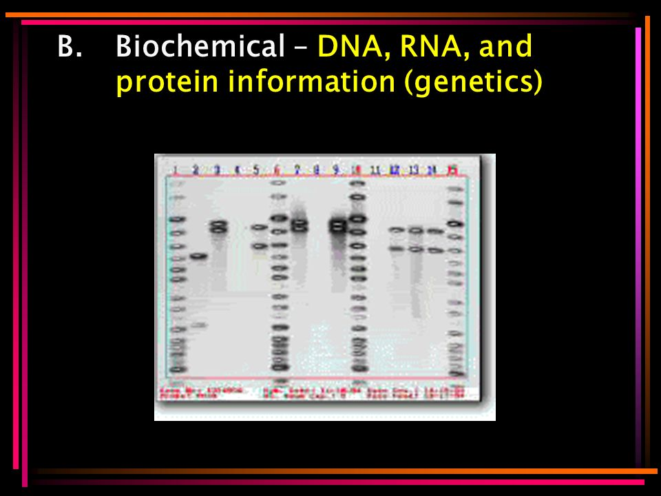 B.Biochemical – DNA, RNA, and protein information (genetics)