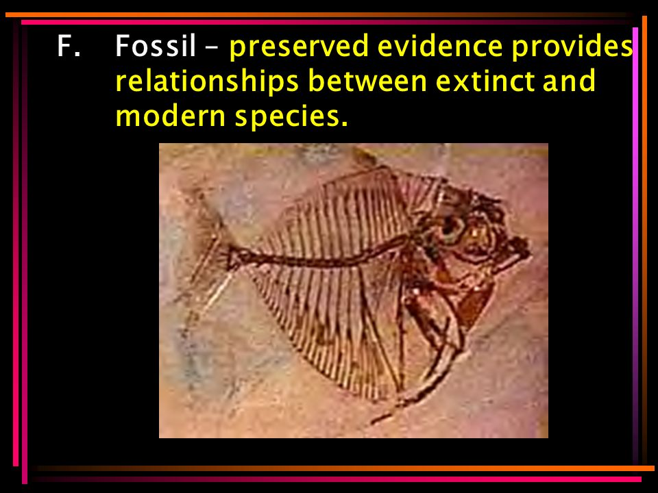 F.Fossil – preserved evidence provides relationships between extinct and modern species.