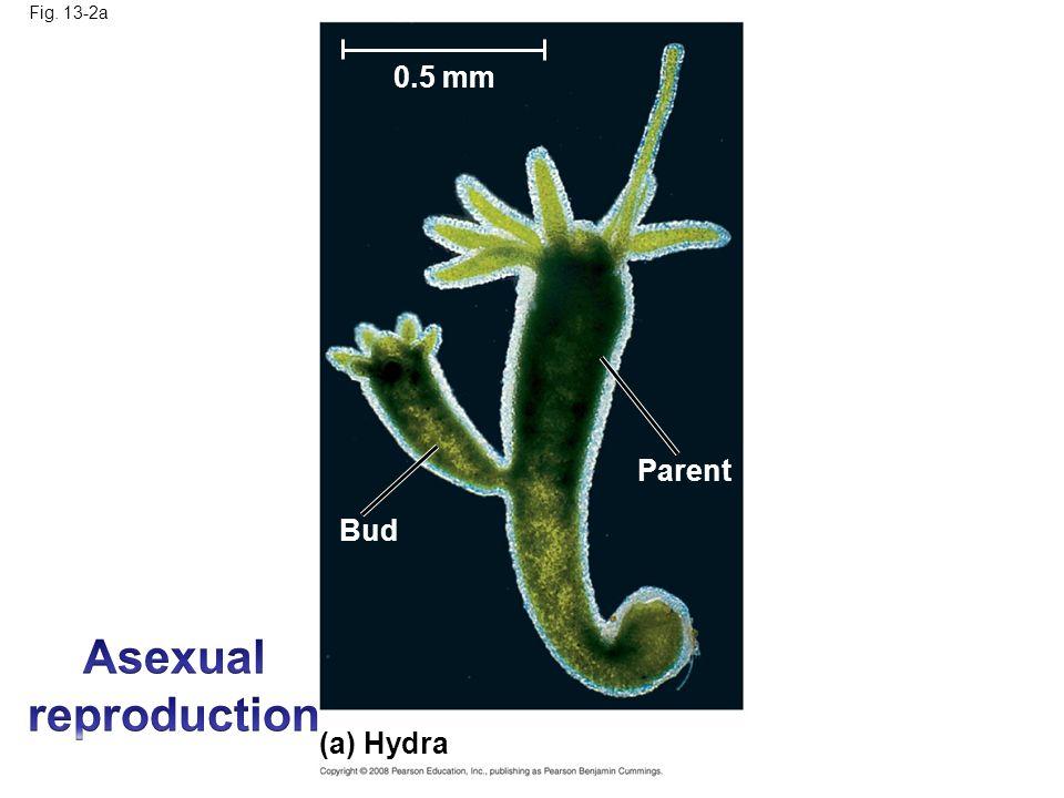 organisms like hydra