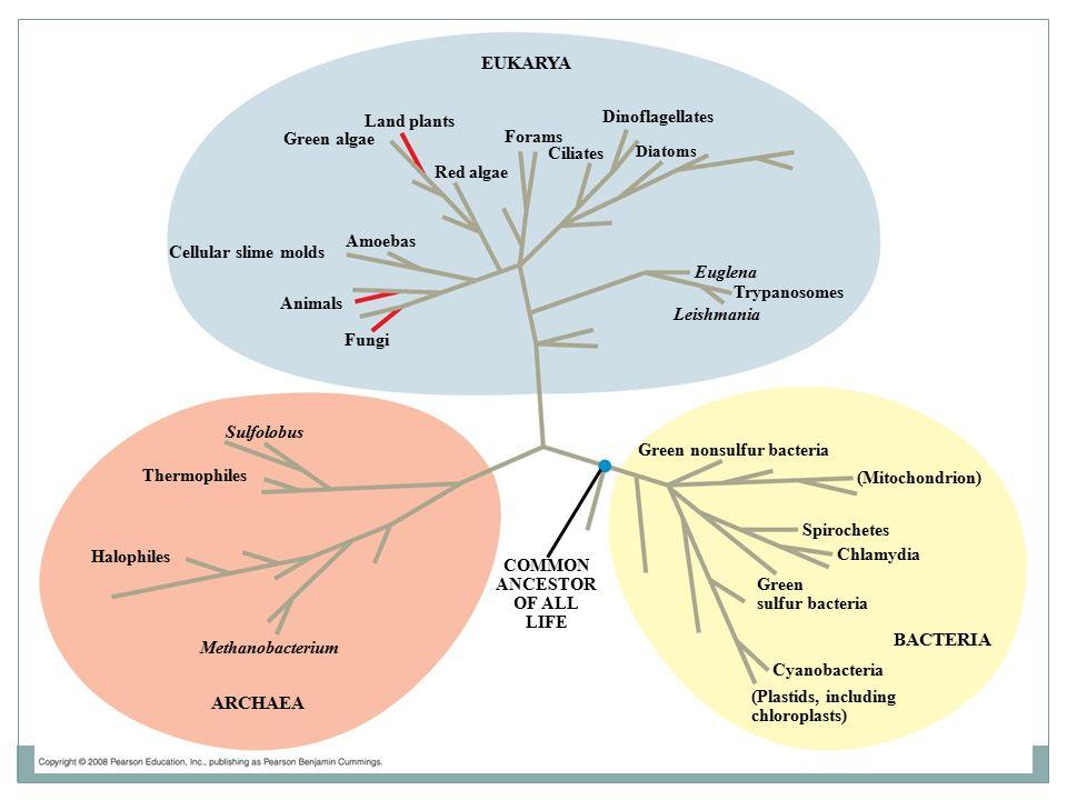 How Plants Colonized Land Plant Diversity I Fungi Eukarya