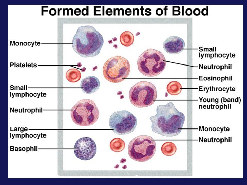 Image result for blood formed elements
