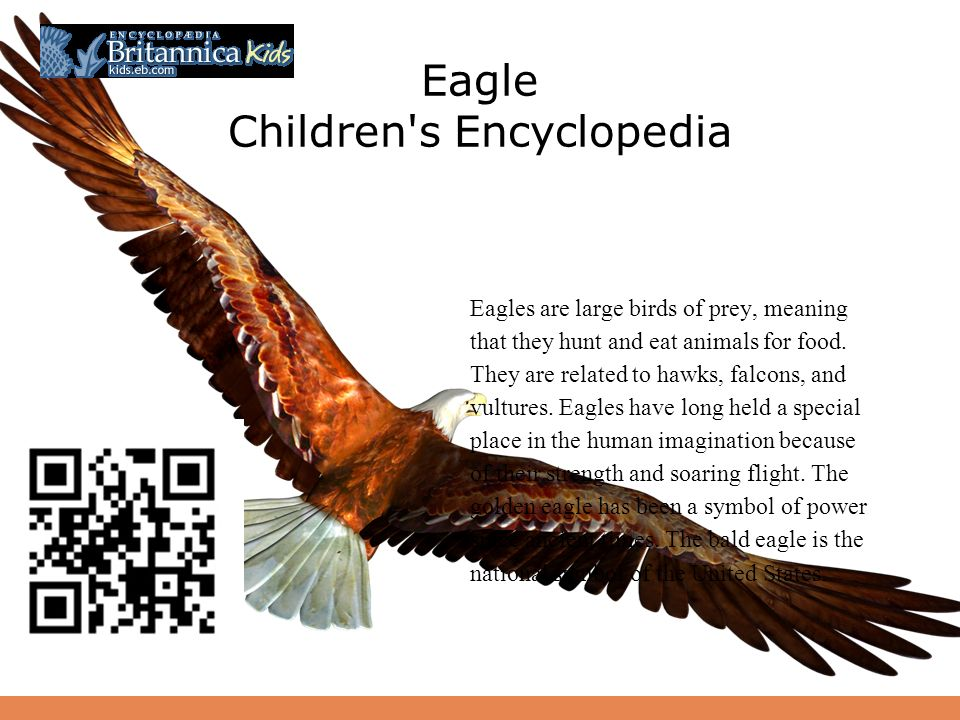 Have An Eagle Adventure By Margaret Taylor For Grades Ppt Download