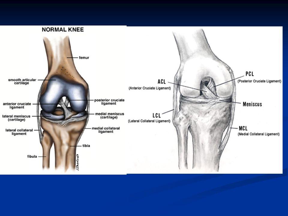 Rehabilitation of anterior cruciate ligament Dr. Ali Abd El-Monsif ...