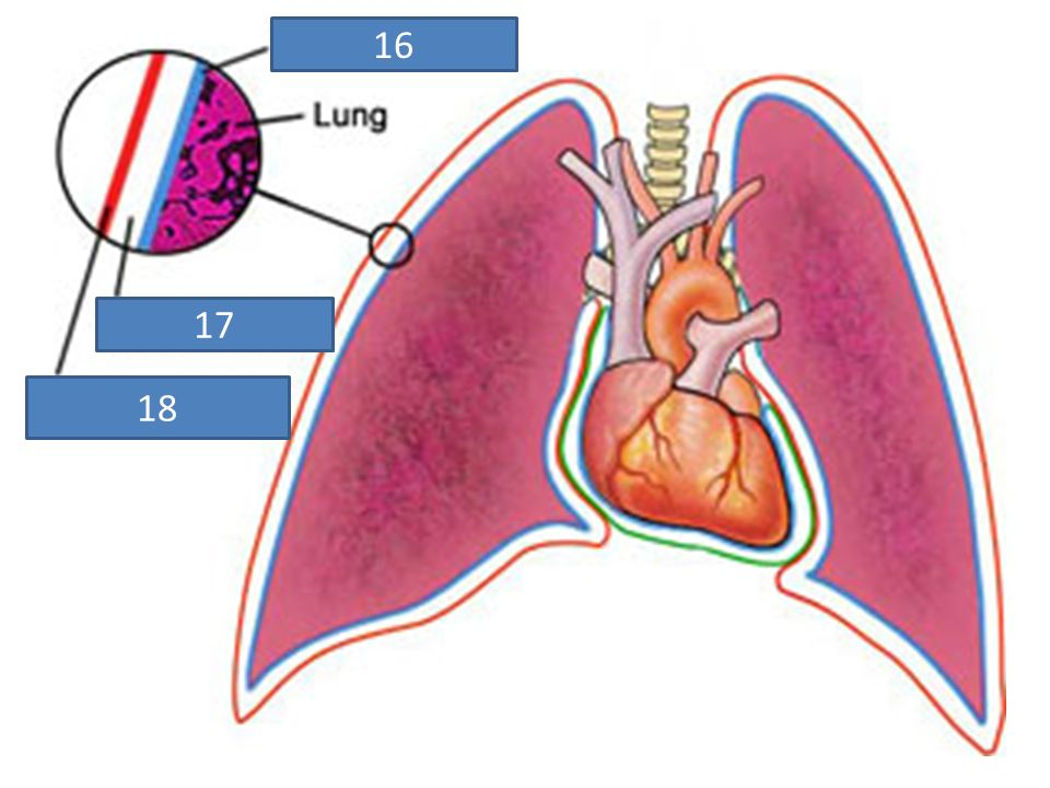 Review for Quiz 2 Body Cavities, Membranes ppt download