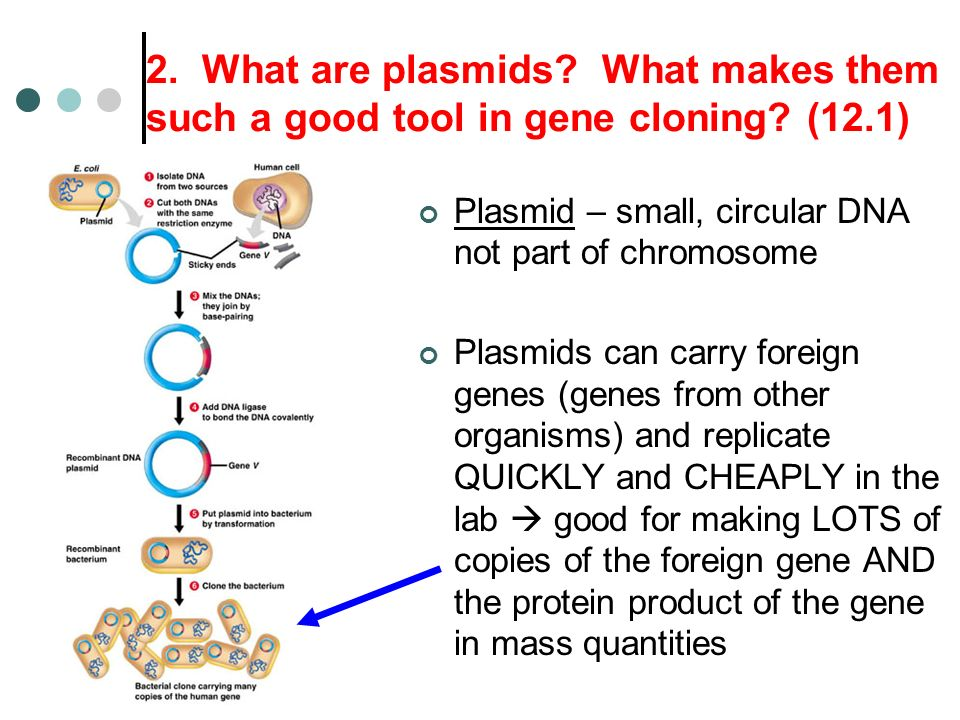 the genesis history and effects of cloning Cloning of humans can be opposed for a variety of reasons cloning to produce embryonic stem cells since embryonic stem cells can trigger rejection in a recipient, researchers hope to produce escs by cloning a patient's own body cells, thus producing an esc line that would not be rejected.