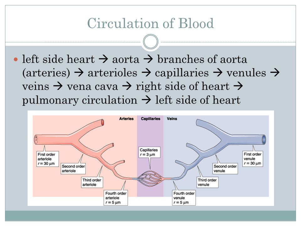 Capilaary An Aorta Branches Diagram Auto Electrical Wiring Diagram