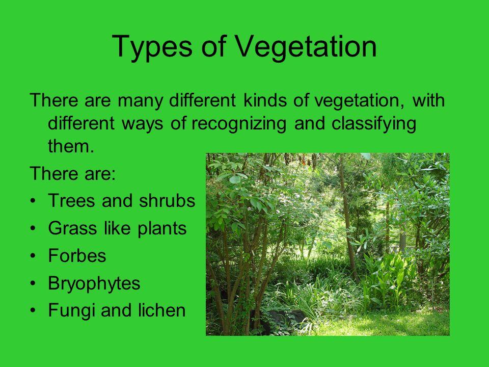 types of vegetation