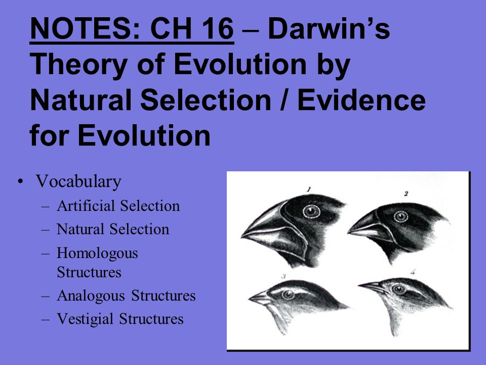 Notes ch 16 darwins theory of evolution by natural selection 2 notes ch 16 darwins theory of evolution by natural selection evidence for evolution vocabulary artificial selection natural selection homologous ccuart Image collections