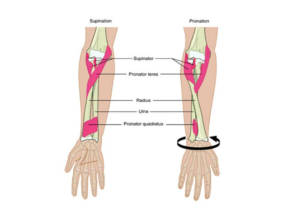 Joints. Types of Synovial Joints 1. Gliding relatively flat surfaces ...