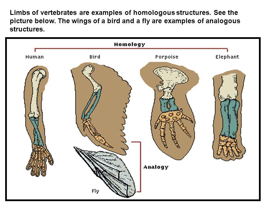 Evolutionary Evidence Part 3 Anatomical Homology Ppt Download