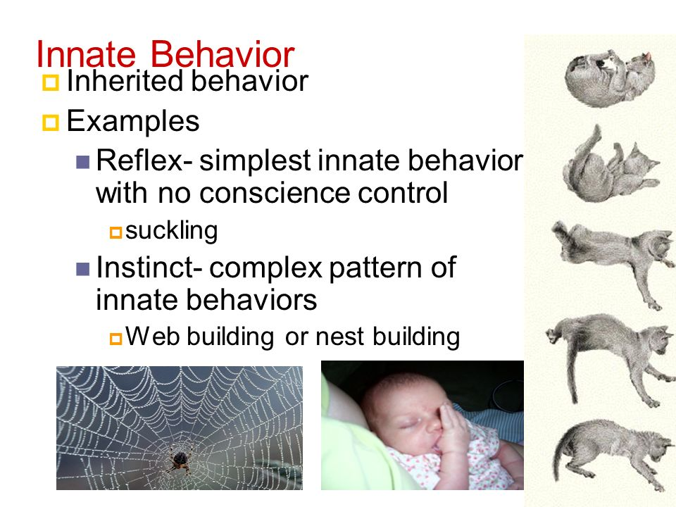 Animal Behavior Behavior Anything An Animal Does In Response To