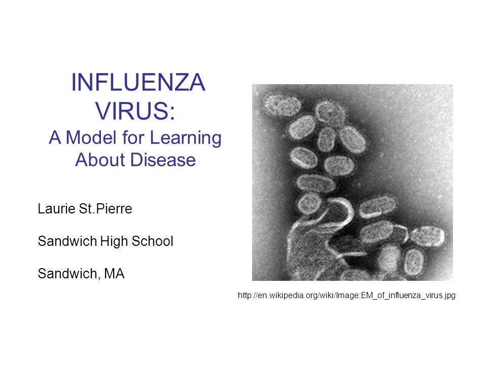 INFLUENZA VIRUS: A Model for Learning About Disease Laurie St.Pierre Sandwich High School Sandwich, MA