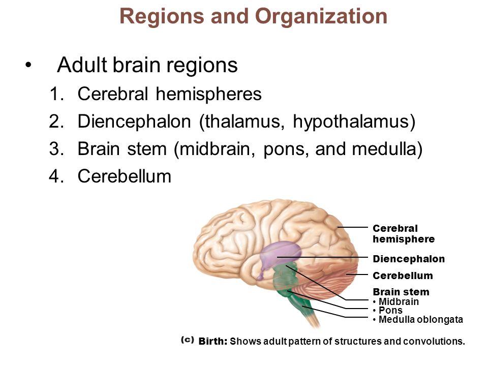 Human Anatomy & Physiology Ninth Edition PowerPoint