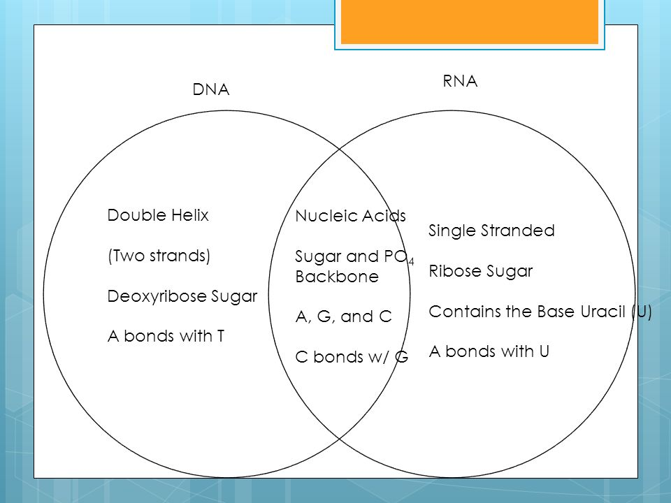 Think Write Use A Venn Diagram To Compare And Contrast The Dna