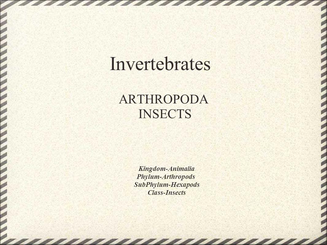 Invertebrates ARTHROPODA INSECTS Kingdom-Animalia Phylum