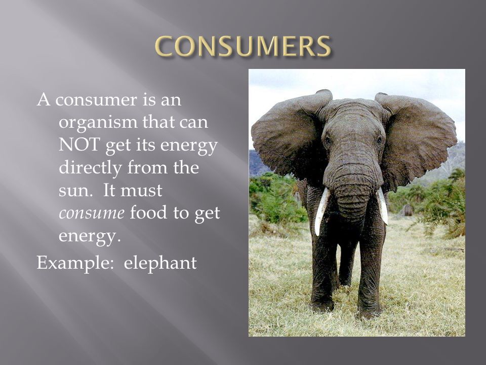 A consumer is an organism that can NOT get its energy directly from the sun.