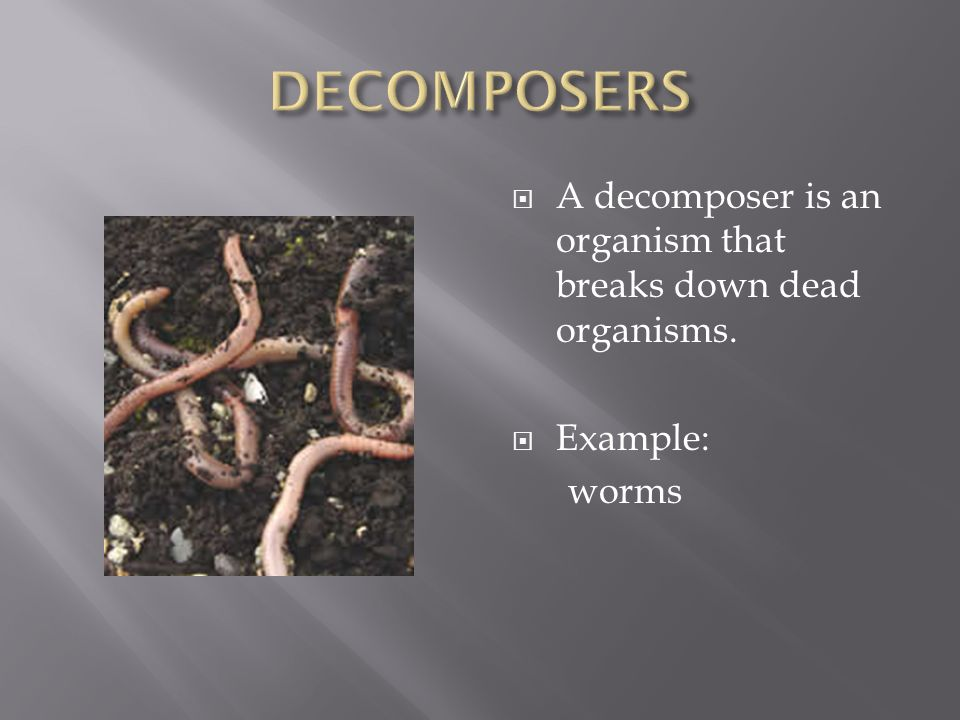  A decomposer is an organism that breaks down dead organisms.  Example: worms