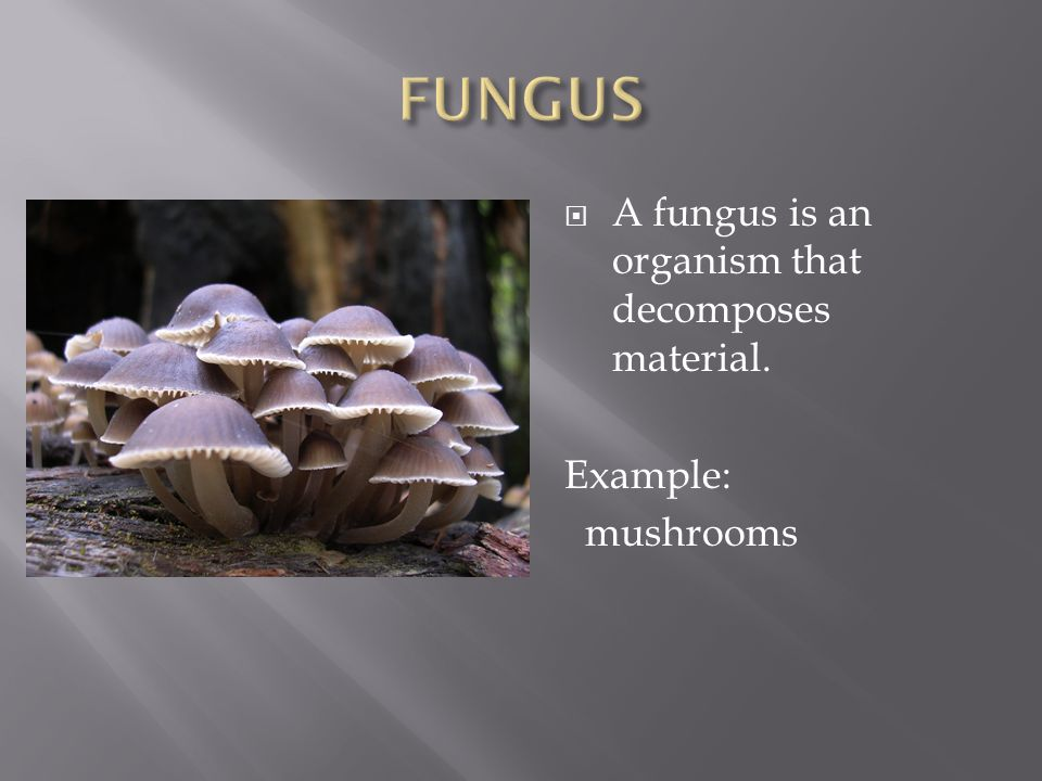  A fungus is an organism that decomposes material. Example: mushrooms