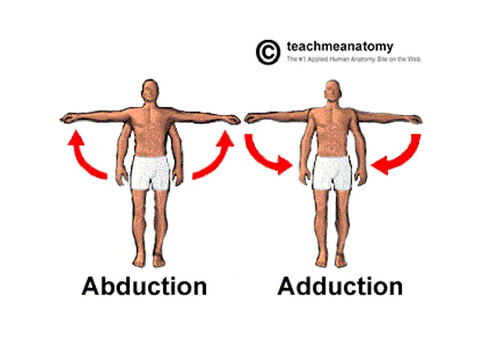 Anatomy Body position and movement terms. Terminology When ...