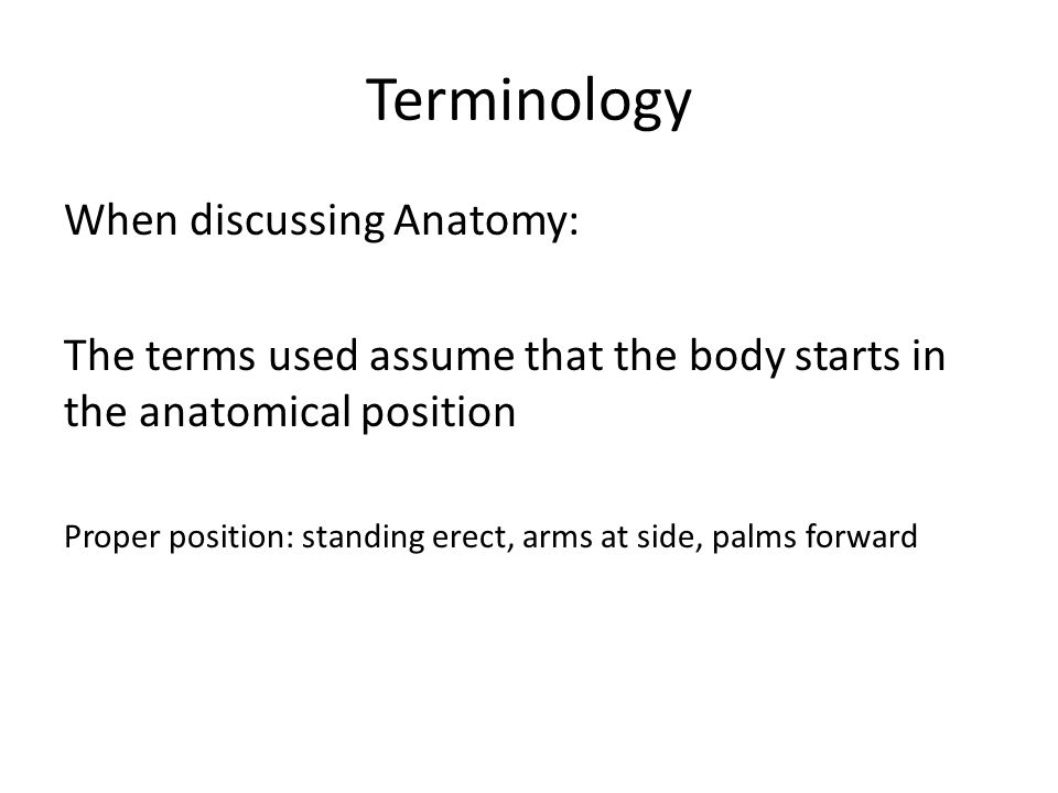 Anatomy Body Position And Movement Terms Terminology When