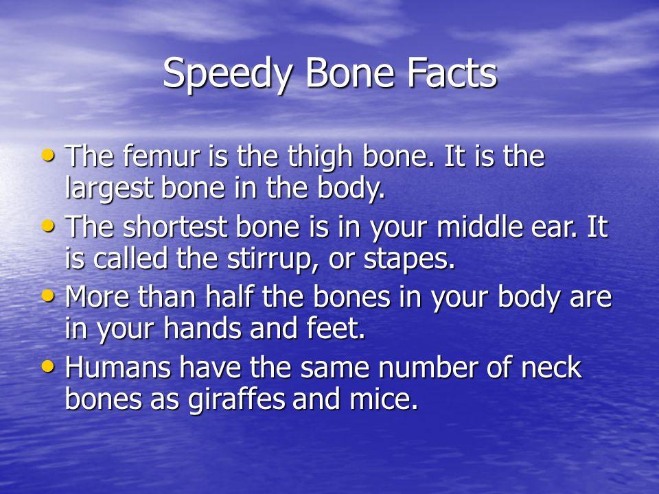 Your Skeletal System 7th Grade Science 4 Th Quarter Ppt Download