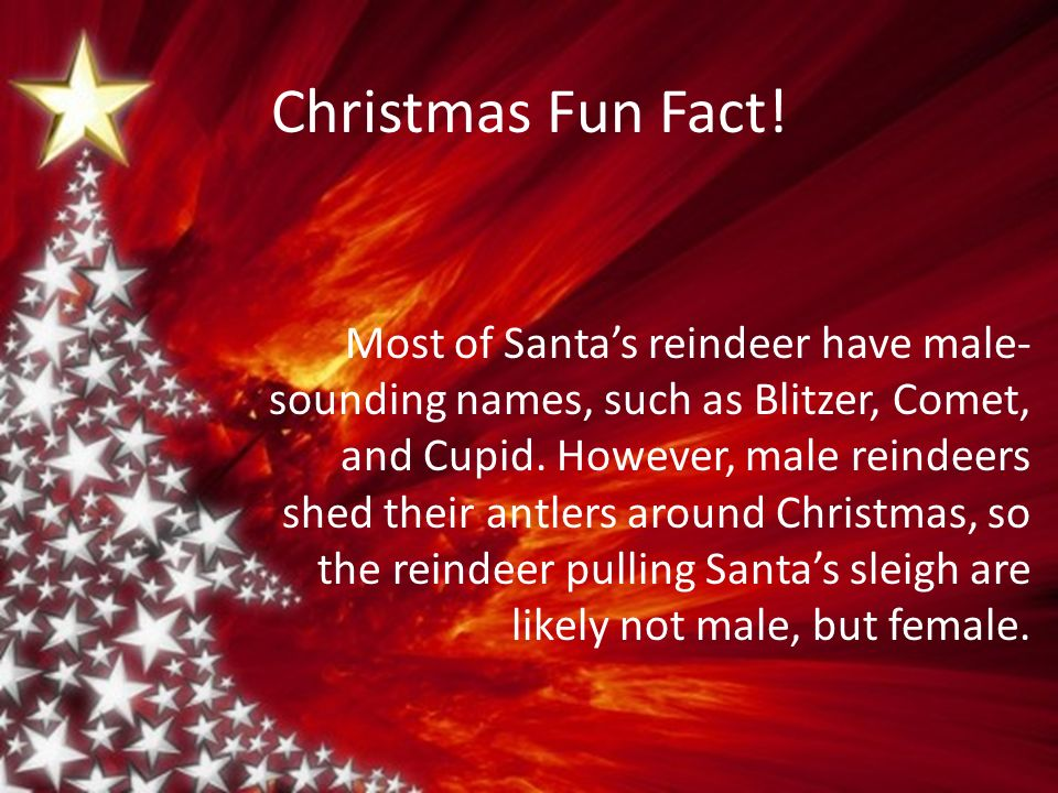Christmas Fun Facts.Haileigh S Holiday Project Christmas Fun Fact Most Of