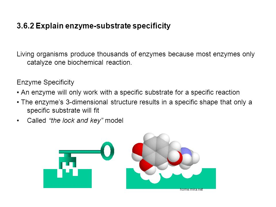 what is an active site in chemistry