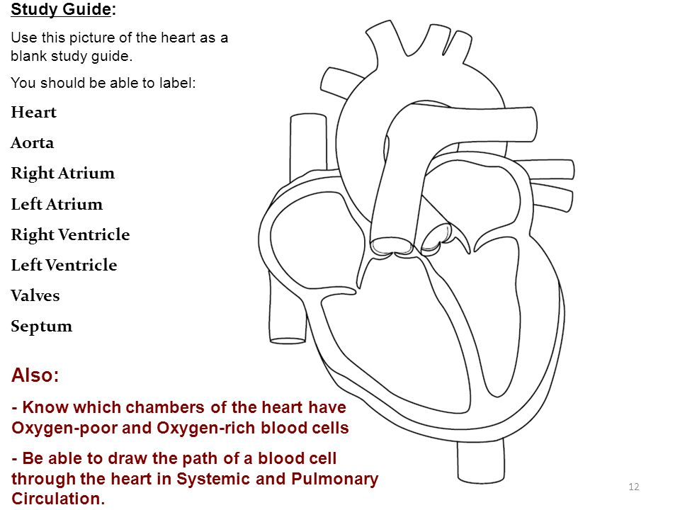 Heart Diagram Label Study Guide Circuit Connection Diagram
