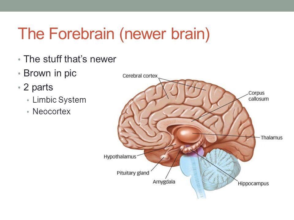 3 parts of midbrain
