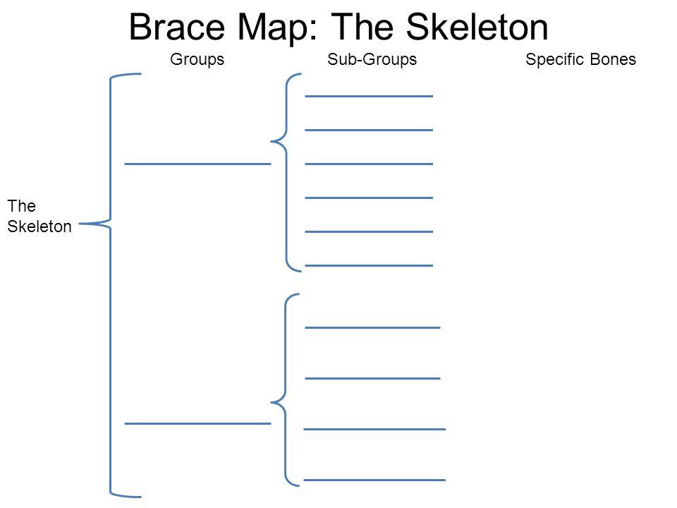 Unit 3 Skeletal System 2b Explain How The Skeletal Structures