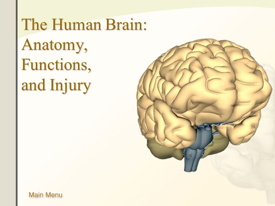 The Human Brain: Anatomy, Functions, and Injury. External Brain ...