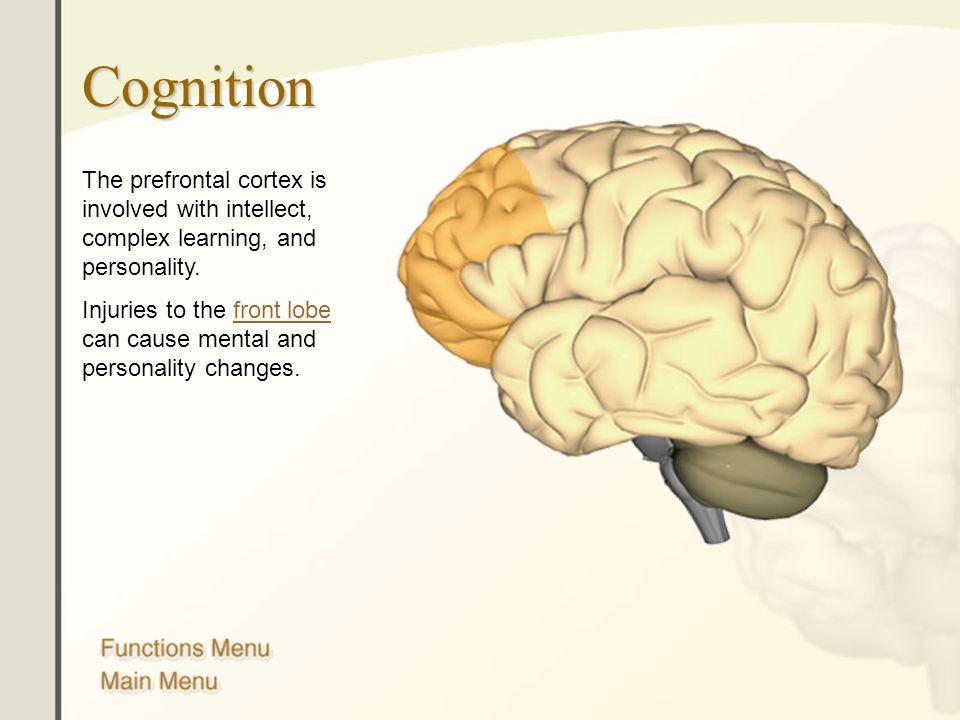 The Human Brain: Anatomy, Functions, and Injury. External Brain ...