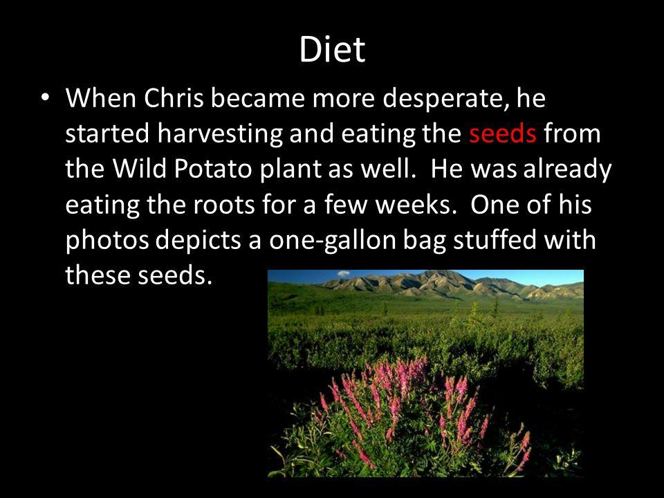chris mccandless potato seeds