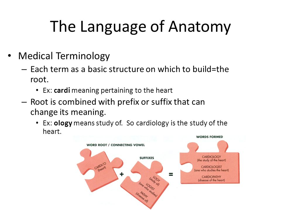 The Language of Anatomy Medical Terminology – Each term as a basic ...