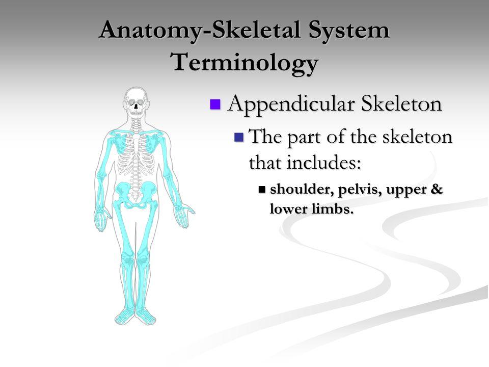 Anatomy Skeletal System Appendicular Skeleton Upper Extremity Ppt