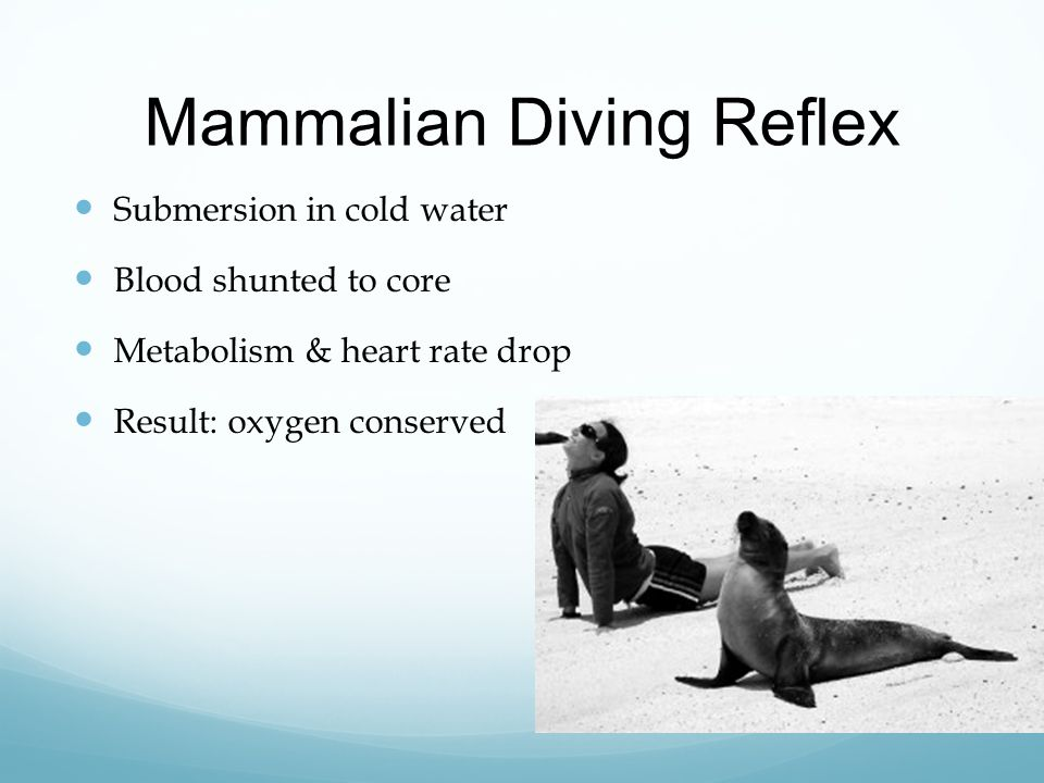 what adaptive value do you think the diving reflex has?