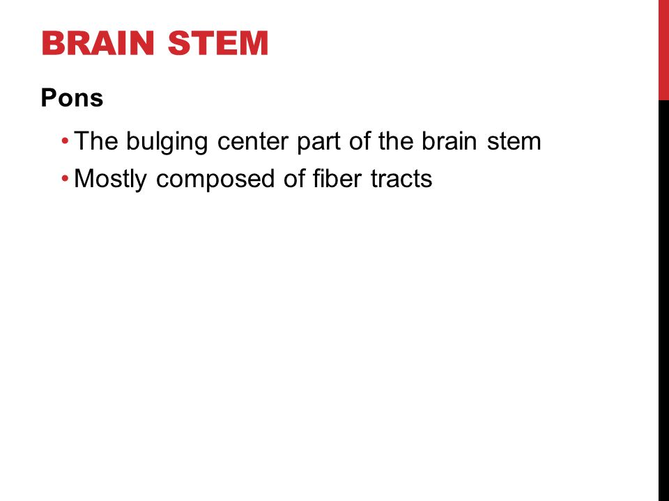 BRAIN STEM Pons The bulging center part of the brain stem Mostly composed of fiber tracts