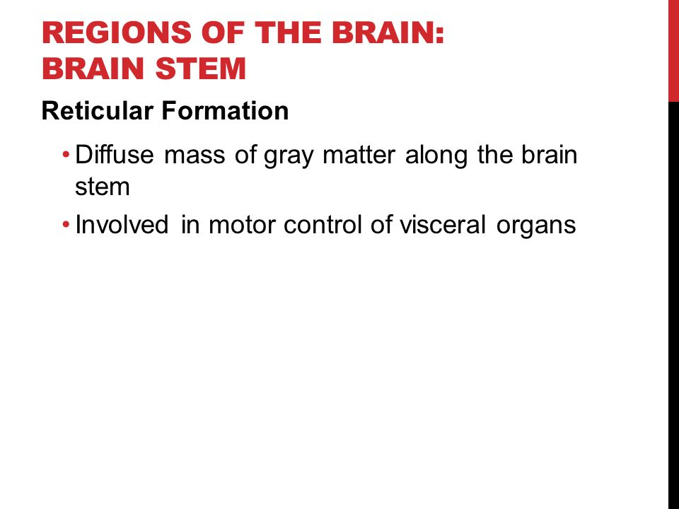 REGIONS OF THE BRAIN: BRAIN STEM Reticular Formation Diffuse mass of gray matter along the brain stem Involved in motor control of visceral organs