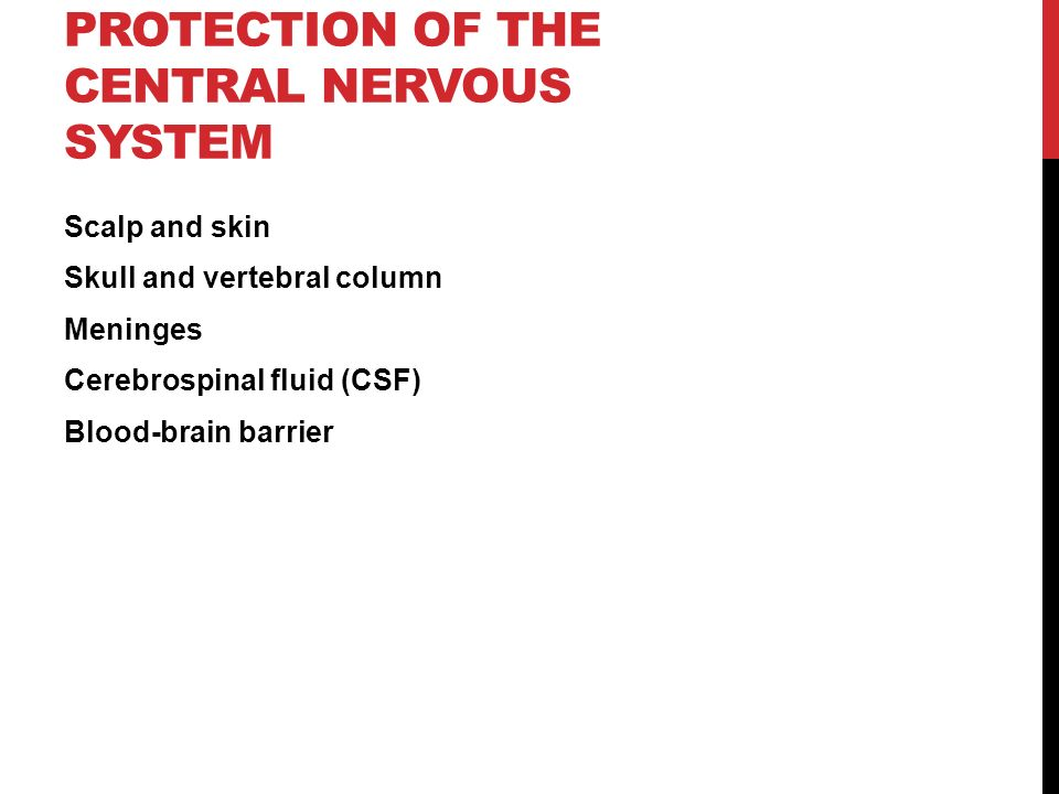 PROTECTION OF THE CENTRAL NERVOUS SYSTEM Scalp and skin Skull and vertebral column Meninges Cerebrospinal fluid (CSF) Blood-brain barrier