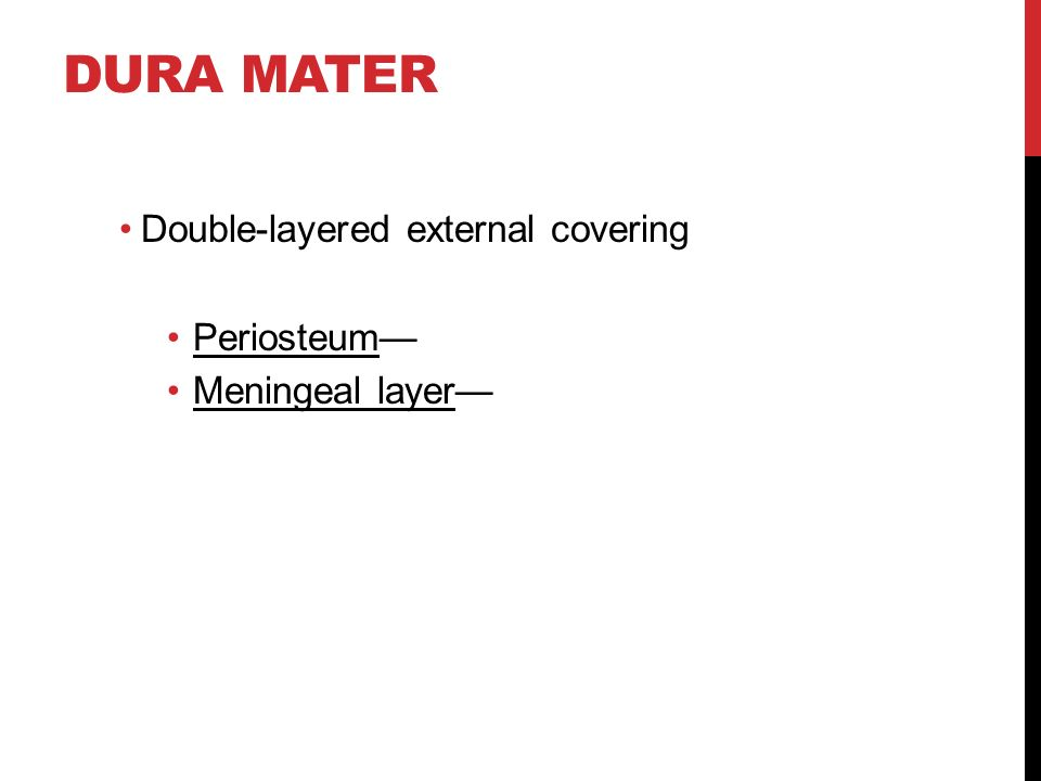 DURA MATER Double-layered external covering Periosteum— Meningeal layer—