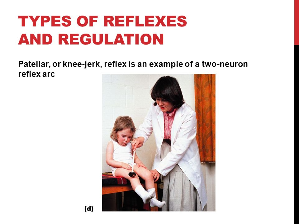 TYPES OF REFLEXES AND REGULATION Patellar, or knee-jerk, reflex is an example of a two-neuron reflex arc