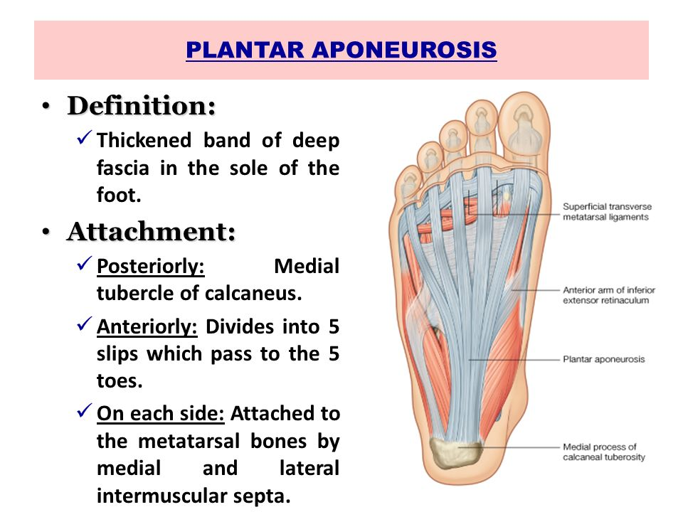 SOLE OF THE FOOT Dr. Jyoti Chopra Professor Department of Anatomy ...