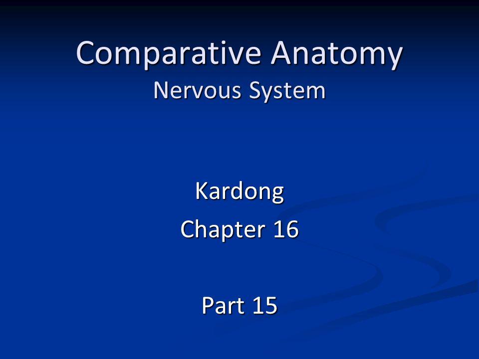 Comparative Anatomy Nervous System Kardong Chapter 16 Part ppt download
