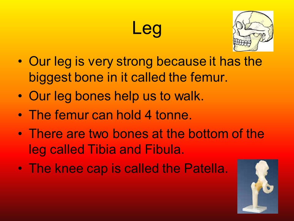 Our Bones This Powerpoint Is About Our Body Contents 1nesbones