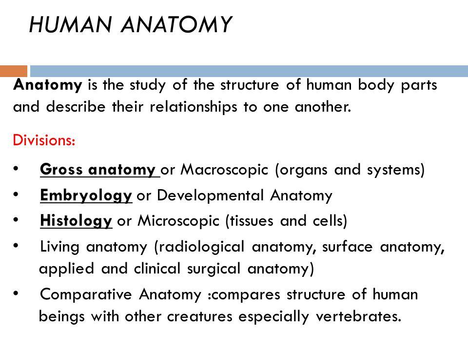 MEDICAL TERMINOLOGY ANATOMY Al Ma`arefa College. Objectives ...