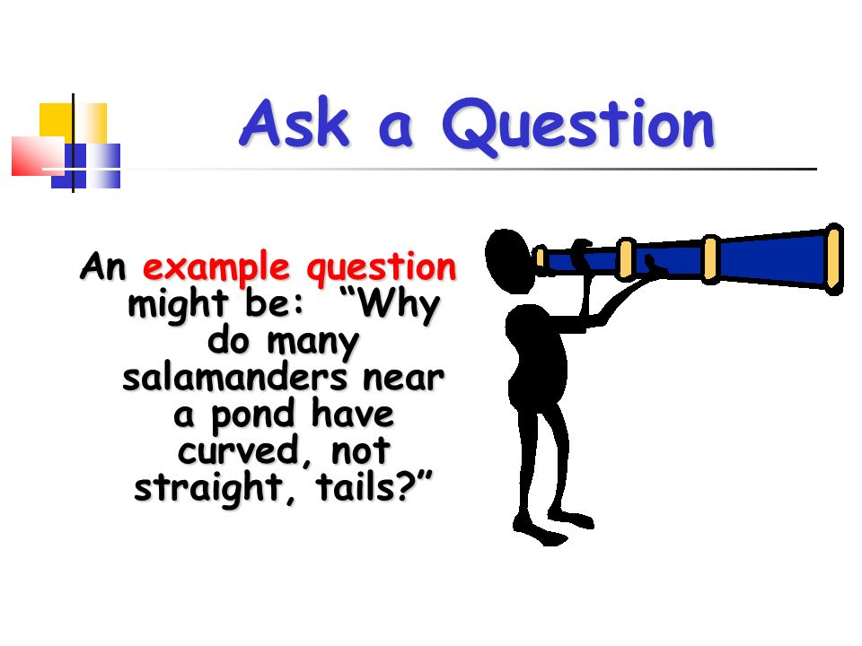 Ask a Question An example question might be: Why do many salamanders near a pond have curved, not straight, tails