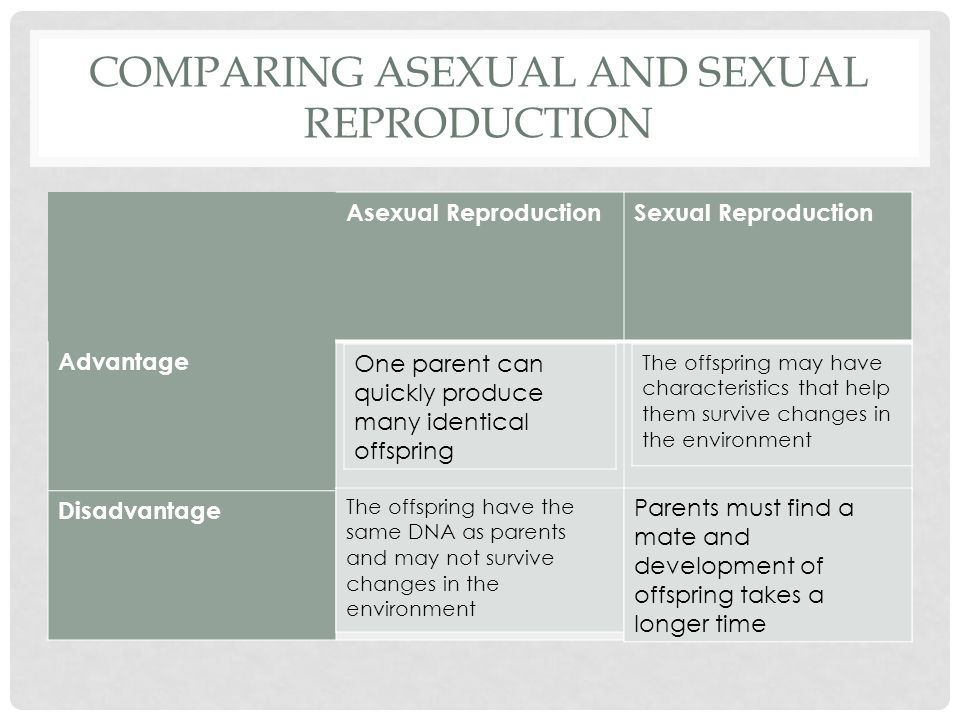 Three main features of asexual reproduction advantages