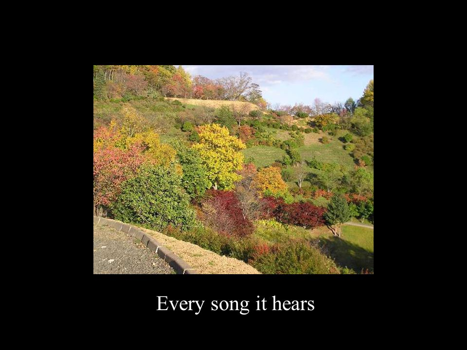 Every song it hears