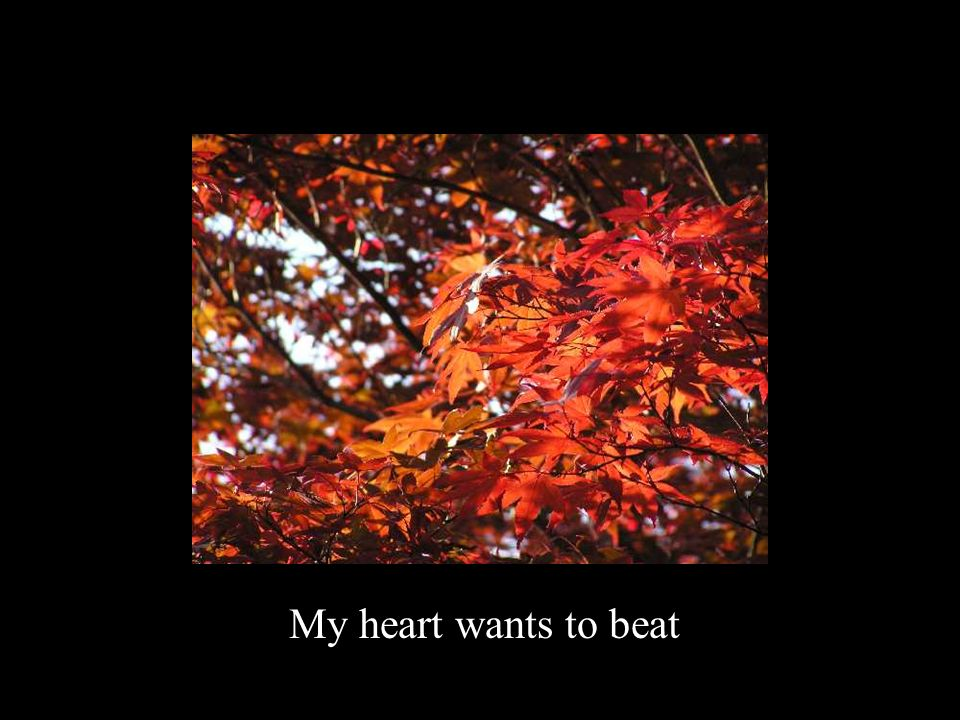 My heart wants to beat